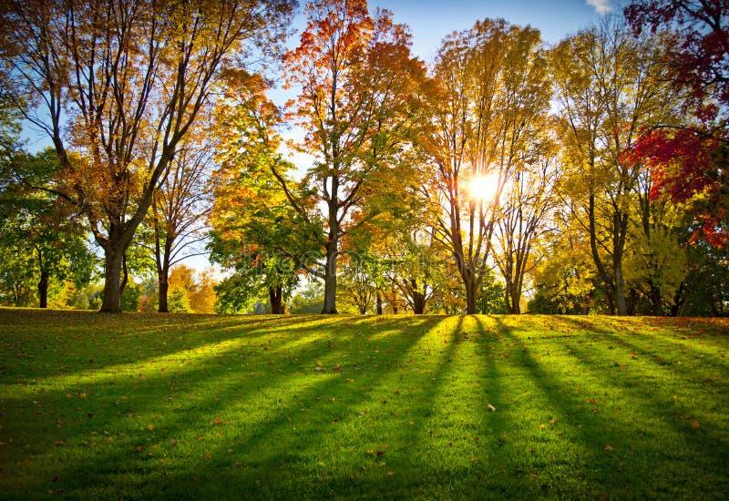 De bomen van de herfst in een park stock foto's