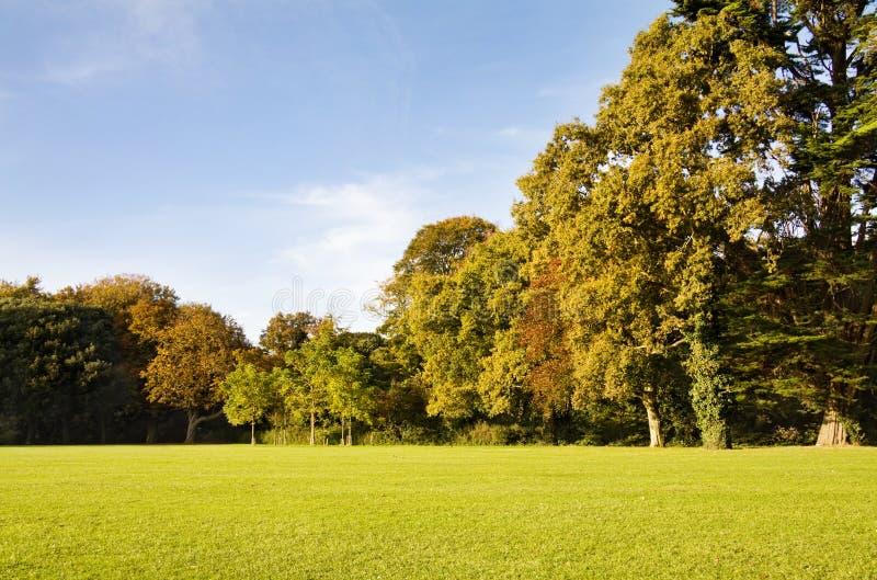 De bomen van de herfst in het park royalty-vrije stock fotografie