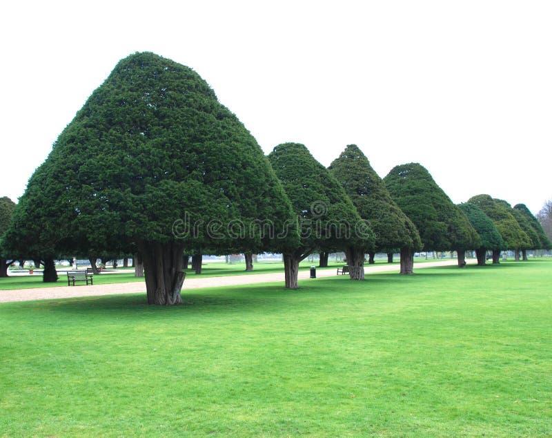 De bomen van de kegel royalty-vrije stock afbeelding