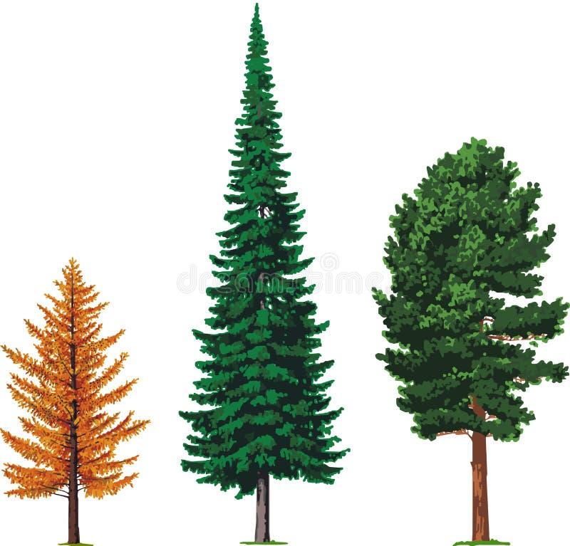 De bomen van de lariks, van de spar en van de ceder. Vector stock illustratie