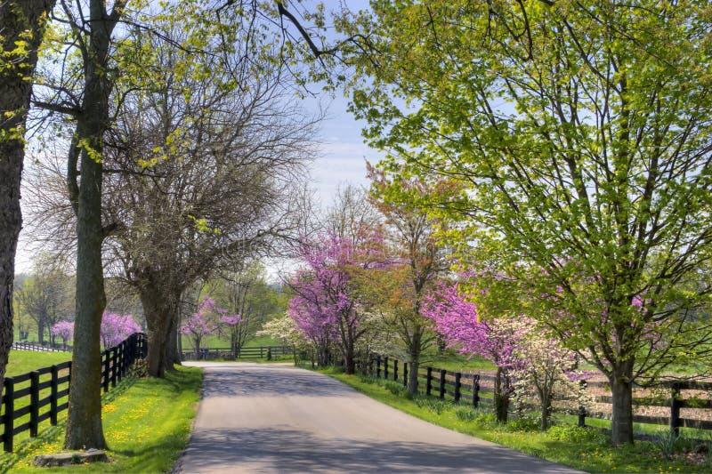 De Bomen van de lente royalty-vrije stock fotografie