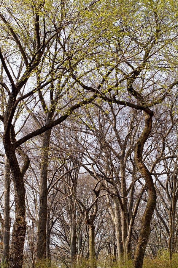 De Bomen Van De Lente Royalty-vrije Stock Foto's