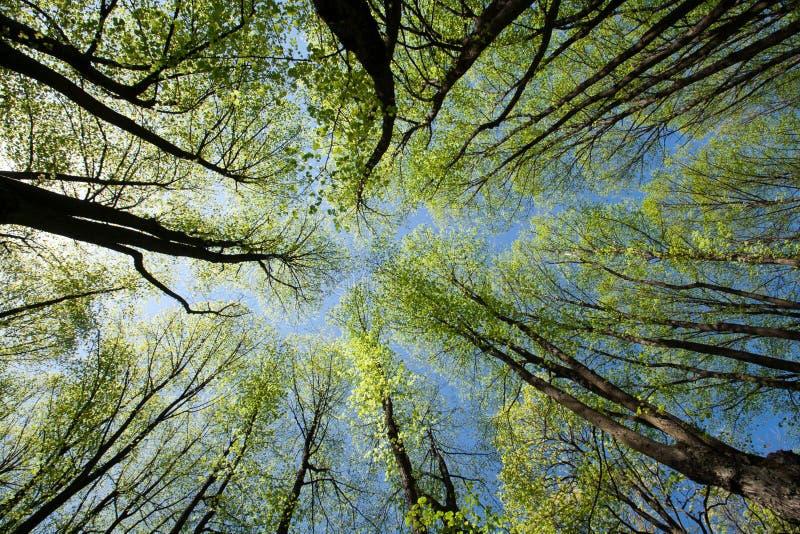 De Bomen van de lente stock foto's