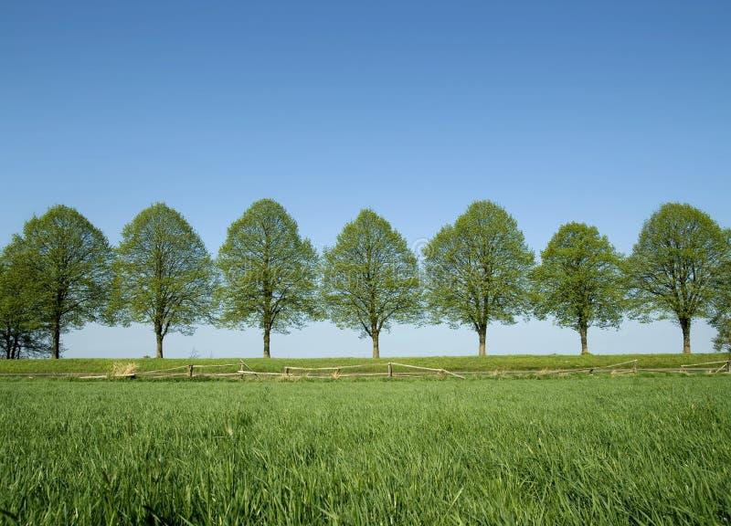 De bomen van de lente stock fotografie