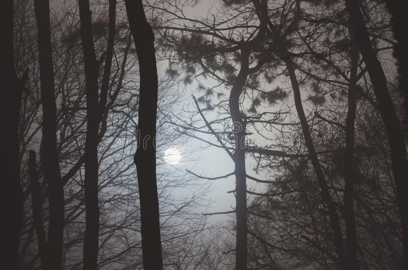 De bomen van de maantrog bij nacht royalty-vrije stock fotografie
