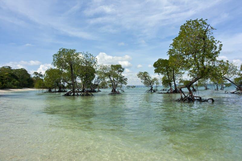 De Bomen van de mangrove stock foto