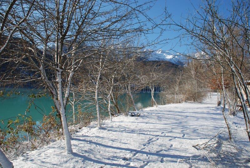 De Bomen van de oever van het meer in Sneeuw stock afbeelding