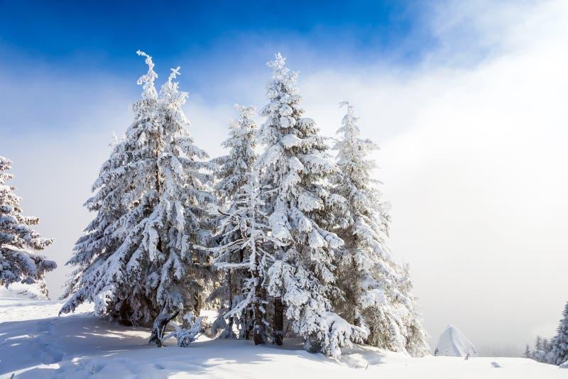De Bomen van de pijnboom die in Sneeuw worden behandeld royalty-vrije stock foto's