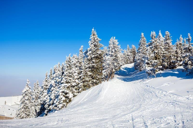 De Bomen van de pijnboom die in Sneeuw worden behandeld royalty-vrije stock afbeeldingen