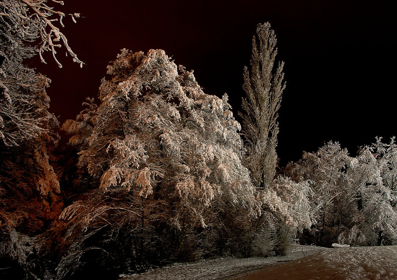 De bomen van de sneeuw royalty-vrije stock afbeeldingen