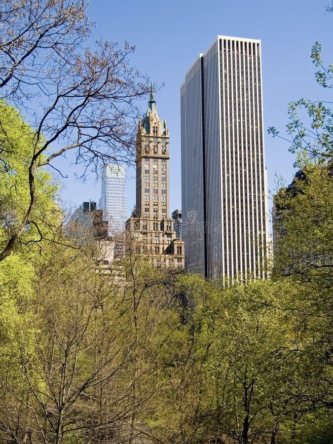 De Bomen van de stad stock afbeeldingen