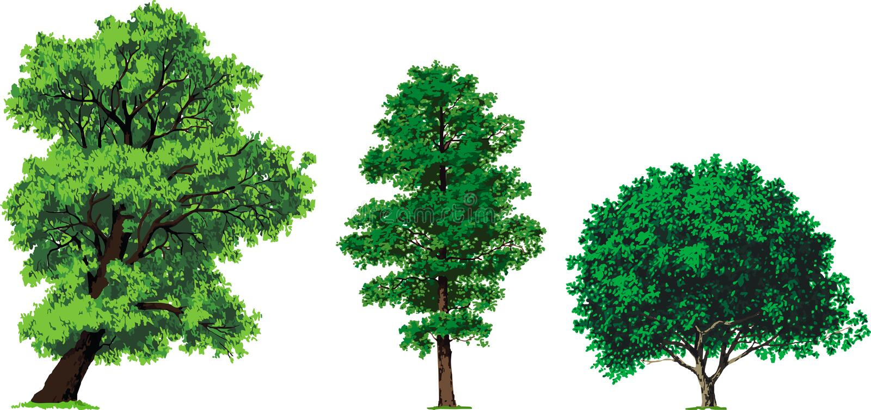 De bomen van de wilg, van de els en van de okkernoot. Vector royalty-vrije illustratie