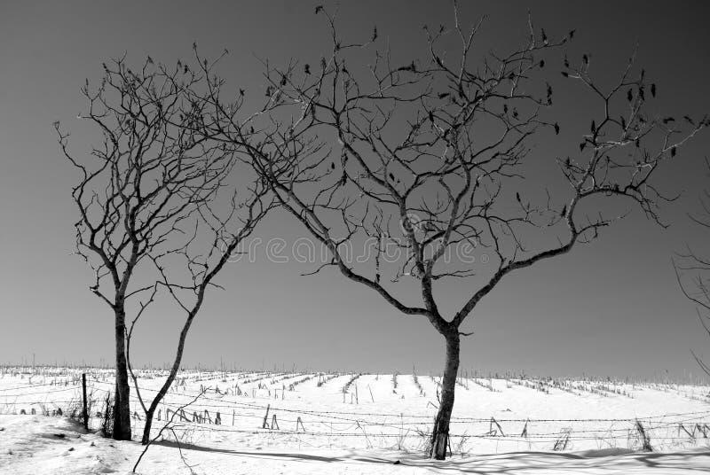 De Bomen van de winter royalty-vrije stock afbeelding