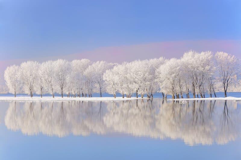De bomen van de winter die met vorst worden behandeld royalty-vrije stock fotografie