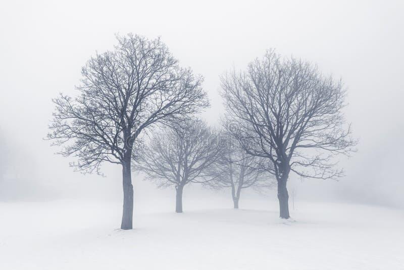 De bomen van de winter in mist royalty-vrije stock fotografie