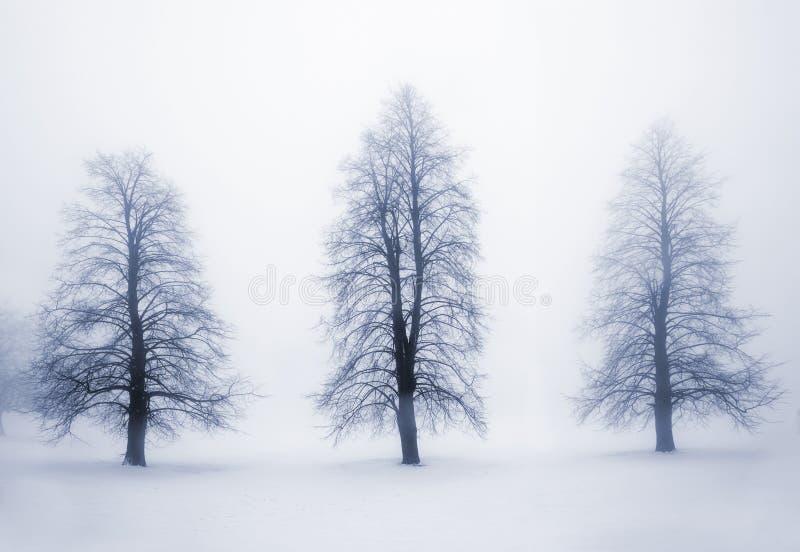 De bomen van de winter in mist royalty-vrije stock foto