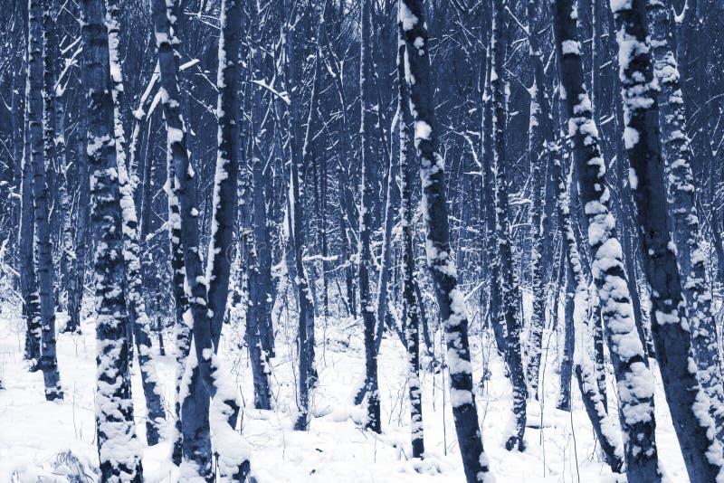 De bomen van de winter in Sneeuw stock afbeeldingen