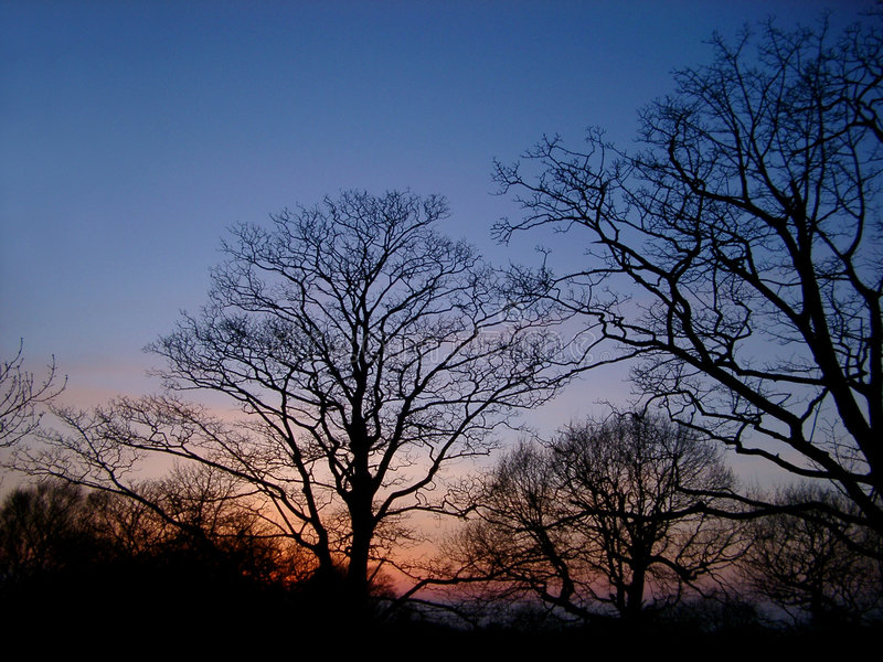 De bomen van de zonsondergang stock afbeeldingen