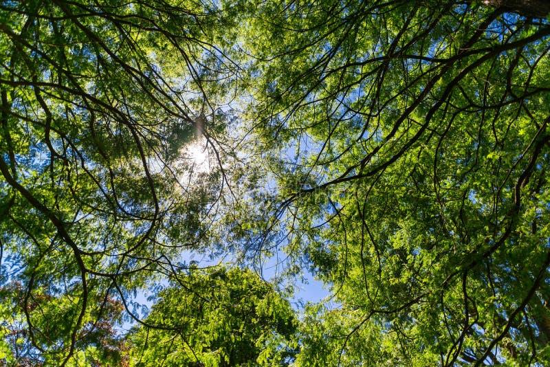 De bomen van de zontrog en blauwe die hemel worden gezien van onderaan royalty-vrije stock afbeeldingen