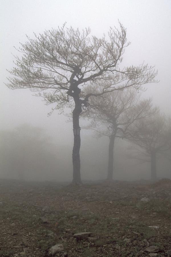 De bomen van Fog royalty-vrije stock foto