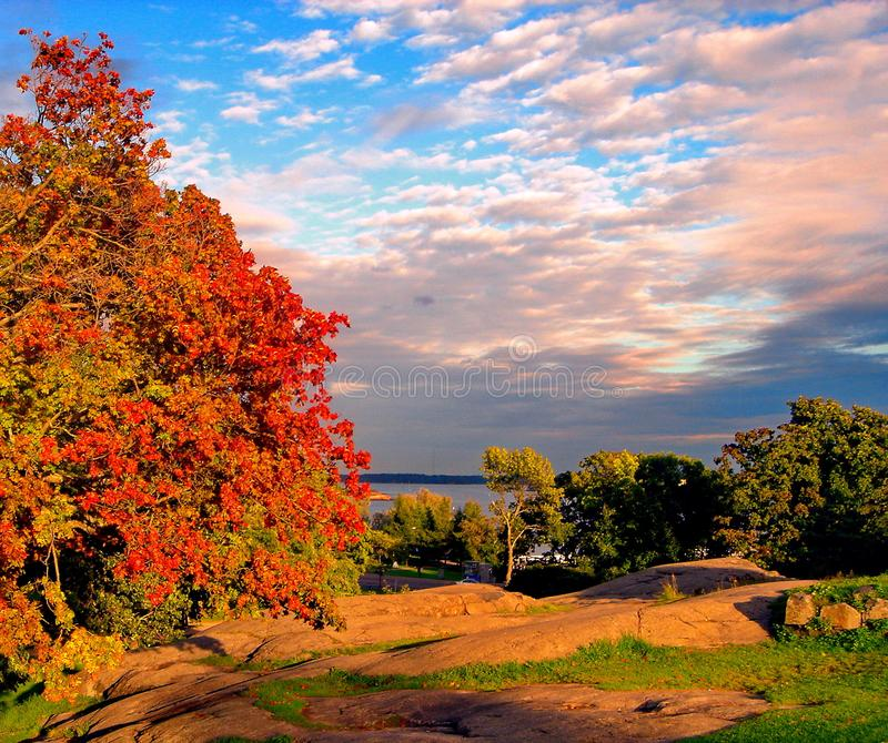 De bomen van de de herfstesdoorn in het park van de dalingsstad stock foto's