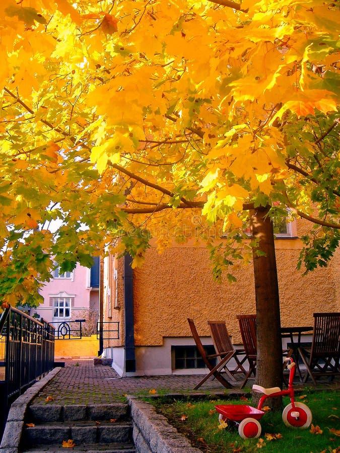 De bomen van de de herfstesdoorn in het park van de dalingsstad royalty-vrije stock afbeelding