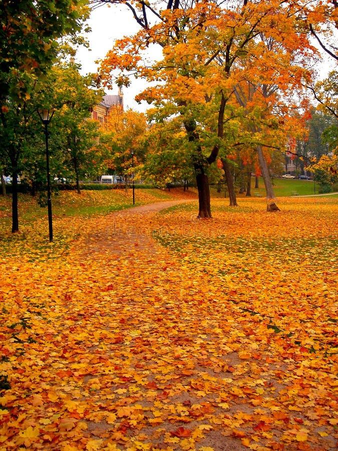 De bomen van de de herfstesdoorn in het park van de dalingsstad royalty-vrije stock afbeeldingen