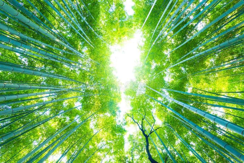 De Bomen van het Arashiyamabamboe het Radiale direct omhoog Kijken stock fotografie