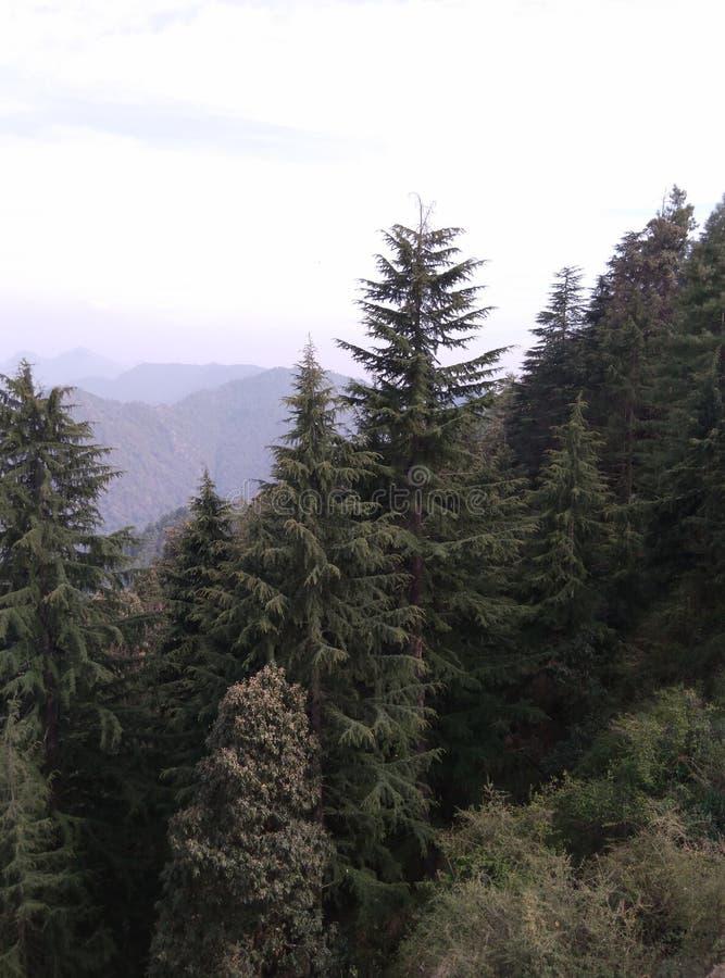 De bomen van het Geenmilieu met mooi Bergenlandschap met Wolken stock foto