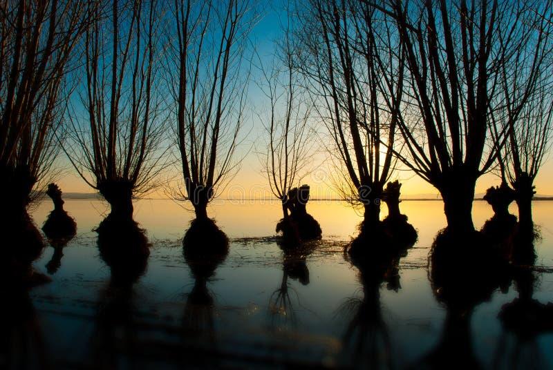 De bomen van het meer royalty-vrije stock fotografie