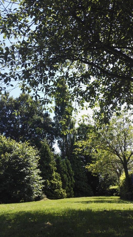 De Bomen van het park stock afbeelding