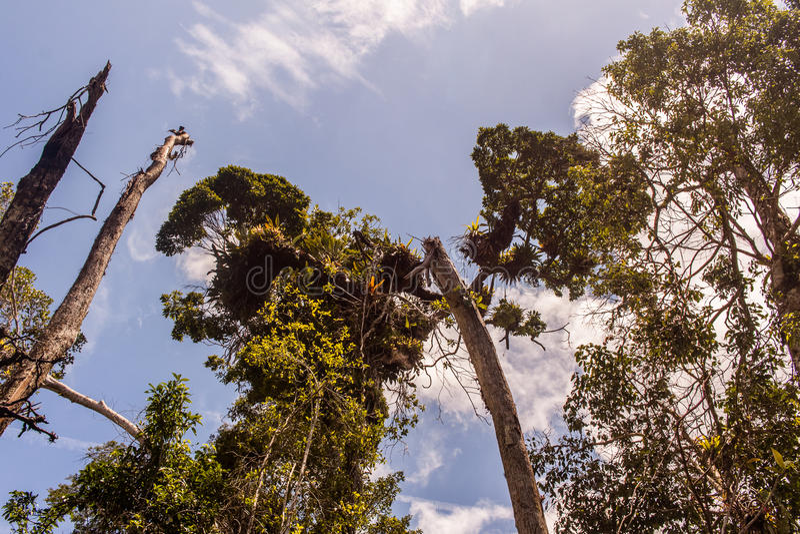 De bomen van het Ubatubastrand stock fotografie
