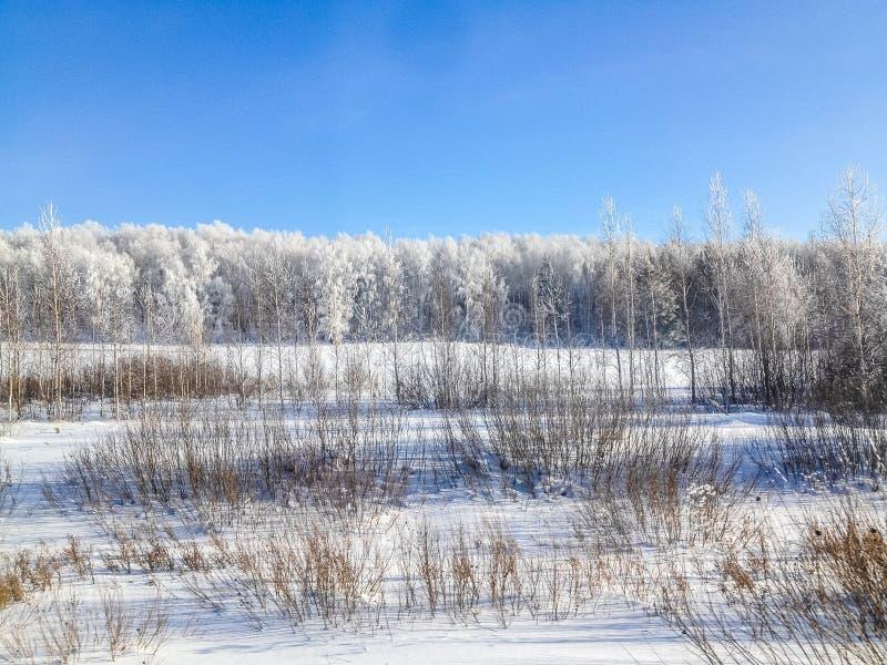 De bomen van het de winterlandschap in de sneeuw stock fotografie