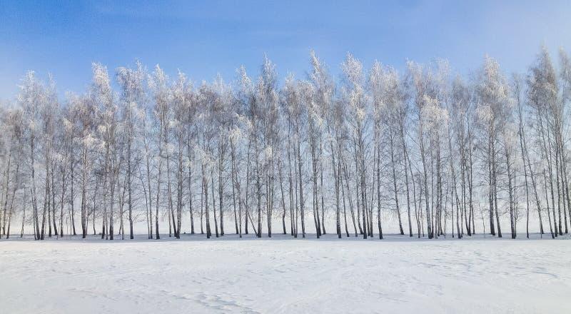 De bomen van het de winterlandschap in de sneeuw stock foto