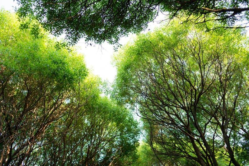 De bomen van het de zomerpark, ochtend Aardmilieu stock afbeelding