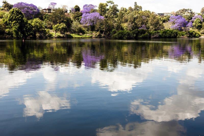 De bomen van Jacaranda bij de rivieroever royalty-vrije stock fotografie