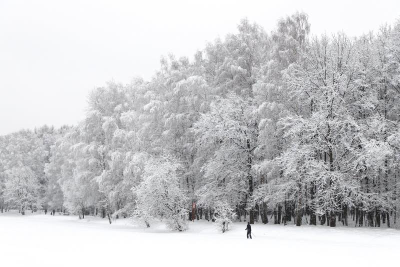 De Bomen van de de wintersneeuw De winterlandschap met skiër en sneeuw royalty-vrije stock fotografie