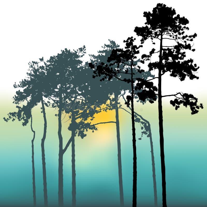 De Bomen van de zonsondergang en van de Pijnboom stock illustratie