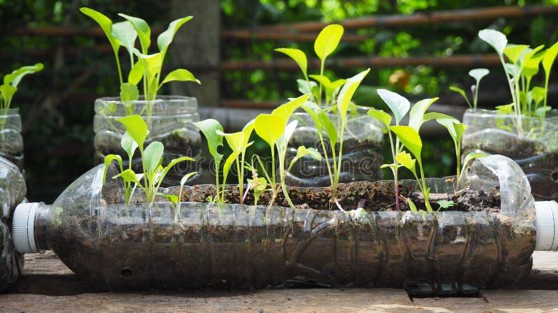 De bomen worden geplant in gerecycleerde plastic flessen Geplant in een fles Plastiek Kringloop stock fotografie