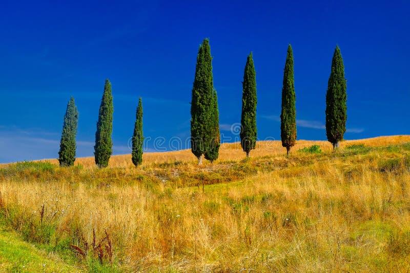 De Bomenlandschap van Toscanië stock foto