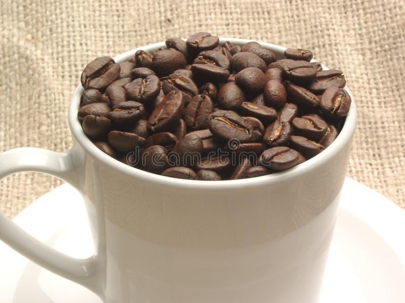 De Bonen van de koffie in Kop stock foto's
