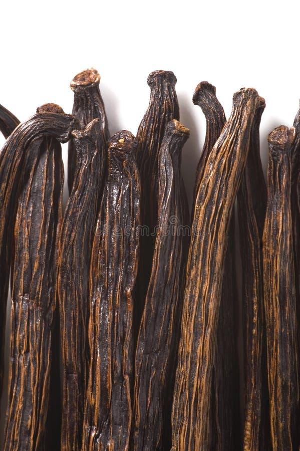 De bonen van de vanille stock foto