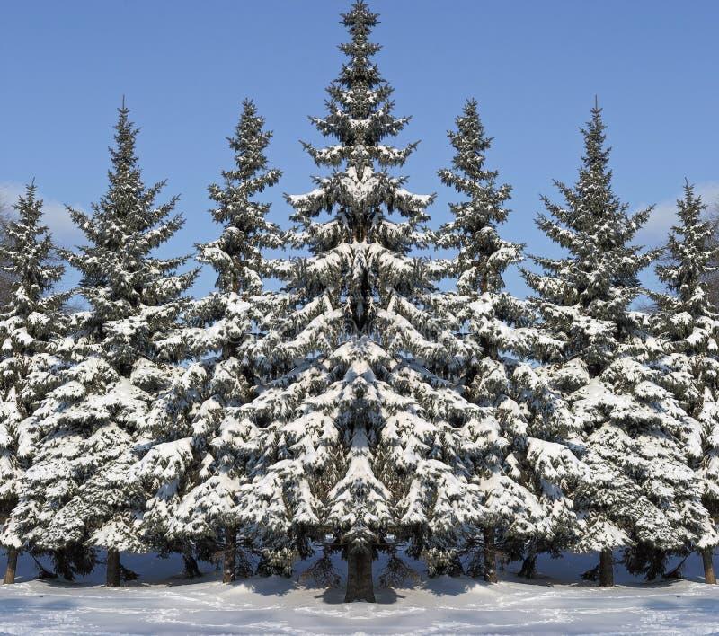 De bont-bomen van het nieuwjaar royalty-vrije stock fotografie