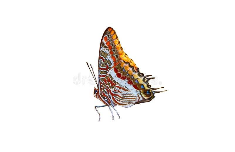 De bont vlinder op witte achtergrond royalty-vrije stock afbeelding