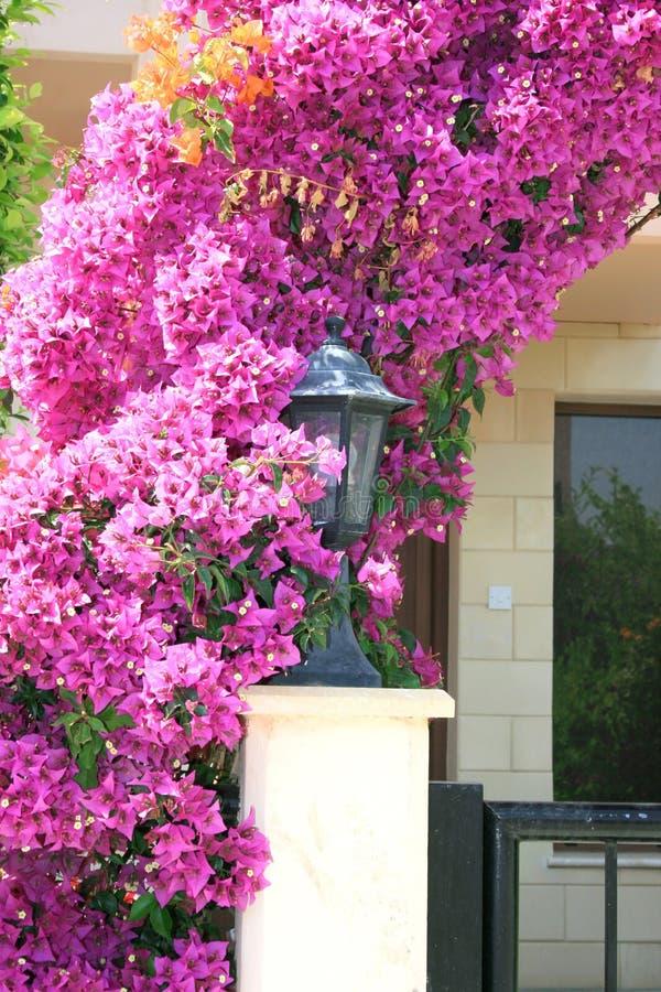 De boog van bloemen bij het huis stock fotografie
