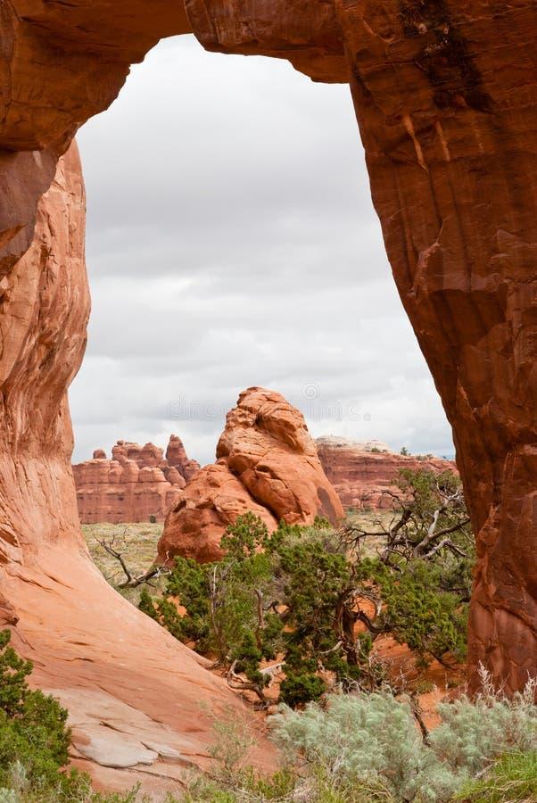 De Boog van de Boom van de pijnboom, Utah, de V.S. stock foto's