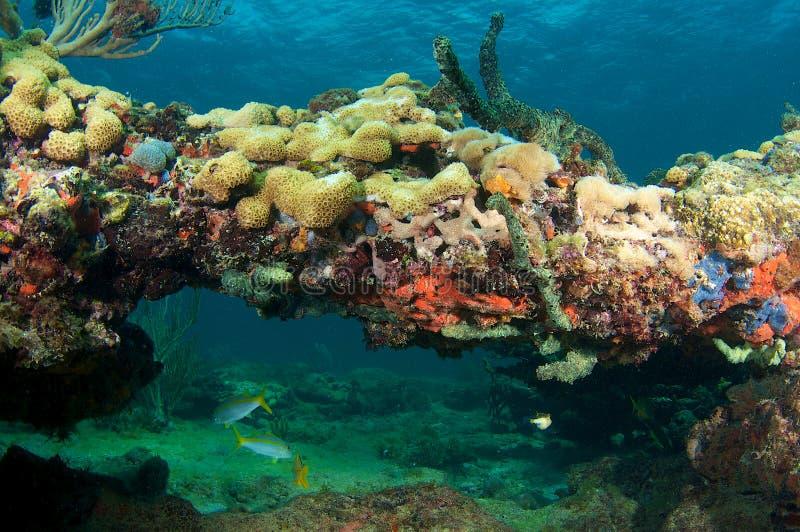De Boog van het koraal stock afbeeldingen