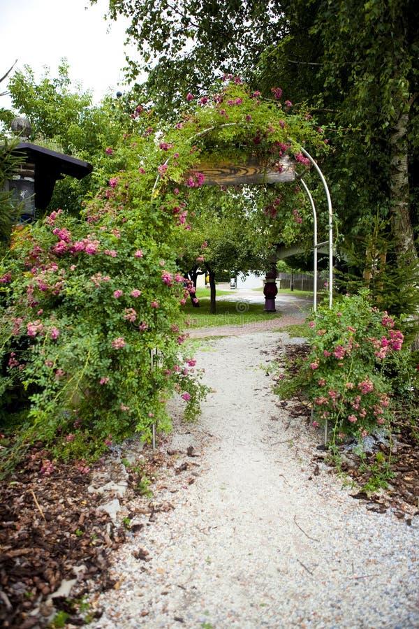 De boog van rozen in de tuin stock foto