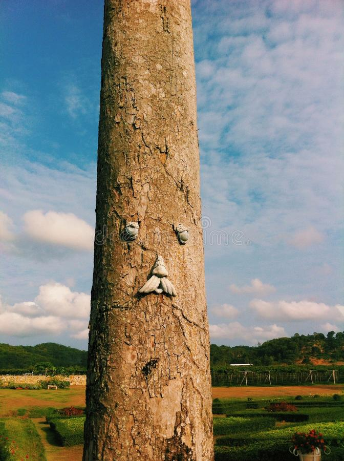 De boom stock afbeeldingen