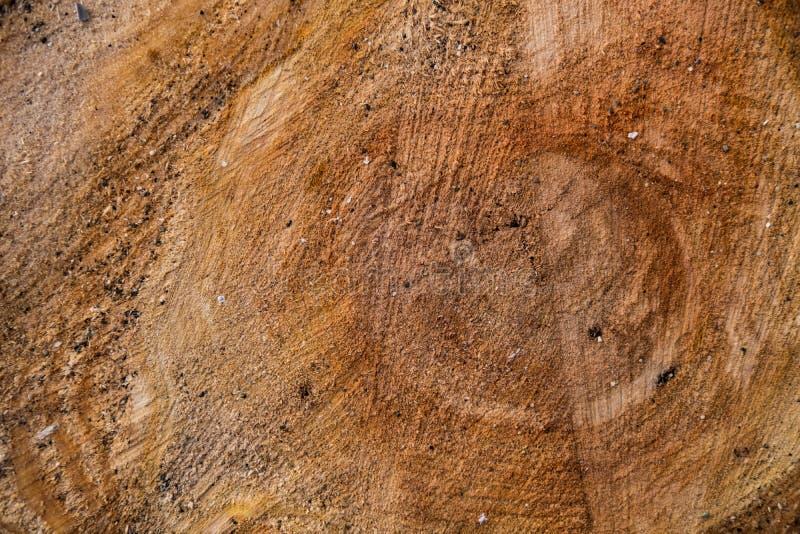 De boom in de besnoeiing met fijn zand royalty-vrije stock foto